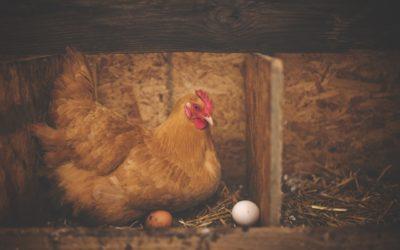 Mindfulness i compassion, kura czy jajko